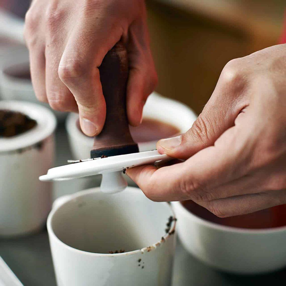 Tea Tasting & Selection