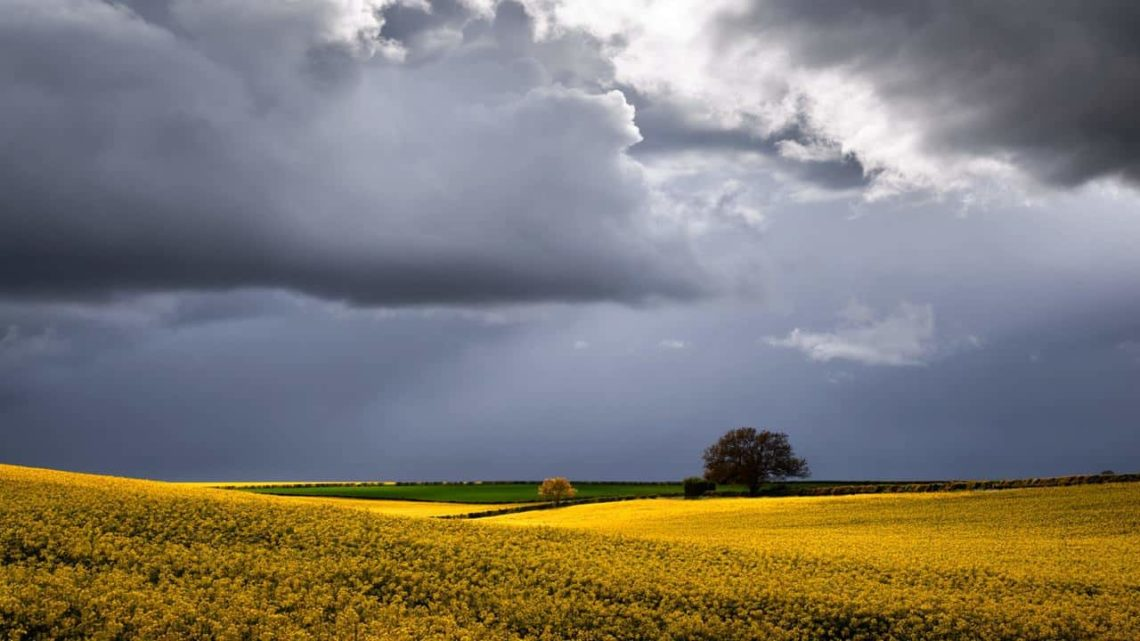 Rape Field Under a Stormy Sky near Shipton-under-Wychwood-min
