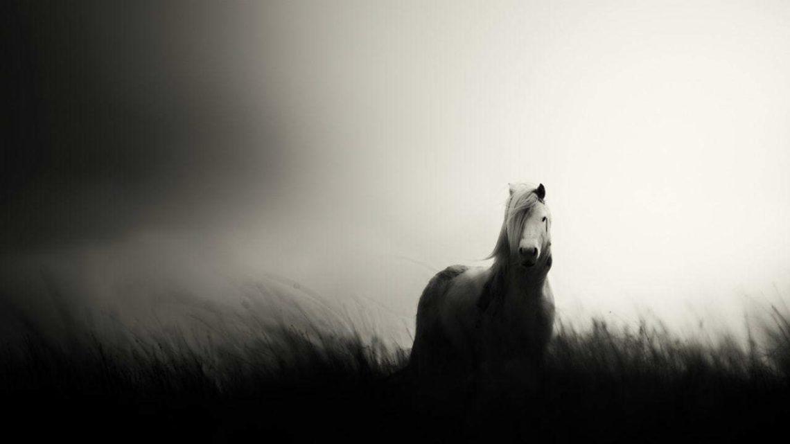 mare-of-myddfai-1-min